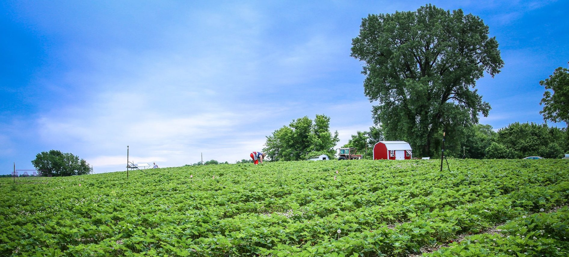 Fresh News | Healthy Harvest of North Iowa | Locally Grown
